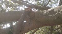 albero 4
